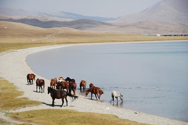 Kyrgystan 22 dagen paarden bij meer