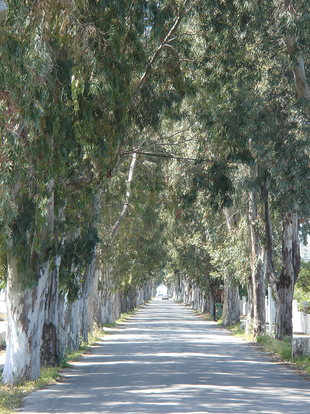 Rhodos RF Eucalyptuslaan