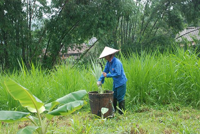 Vietnam Noord Centraal Persoon in rijstveld