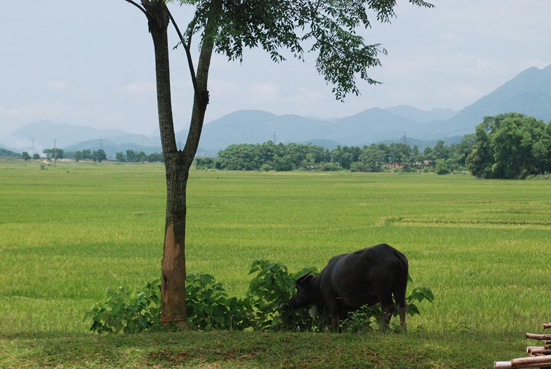 Vietnam Mekong Start