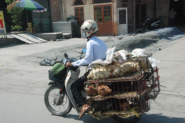 Vietnam Brommer