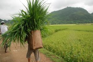 Vietnam Start 2