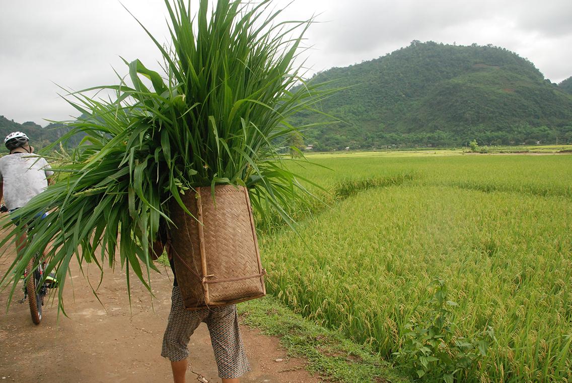 Vietnam Start
