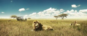 D123-hero-south-africa-safari-game-drive-private-lions-2000x837